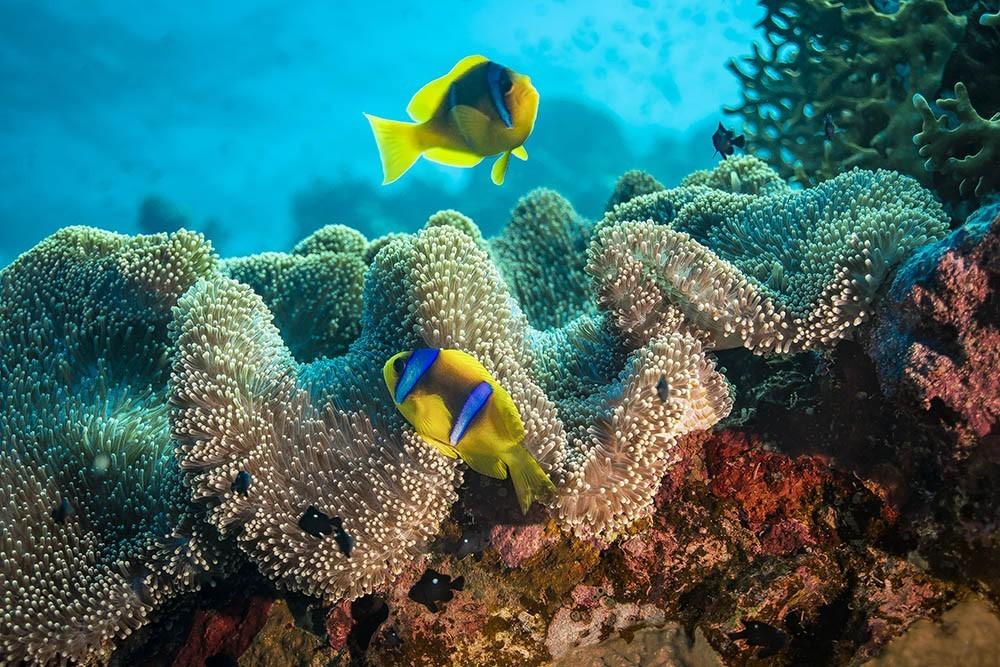 clownfish 07