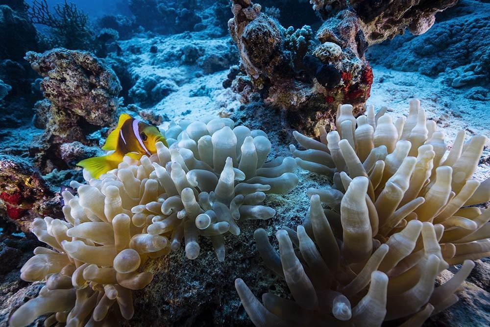 clownfish 14